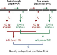 Principle of the QIAseq DNA QuantiMIZE System.